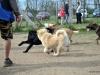 kutya_szocializacio (7)
