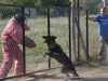 kutyatamadas_prodram-2