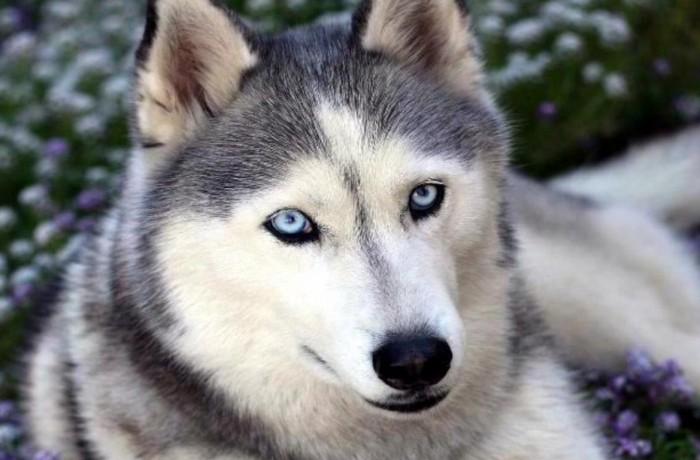 Legaranyosabb kutyafajták