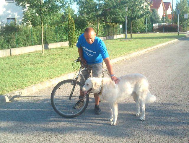 bicikli_kutya (1)