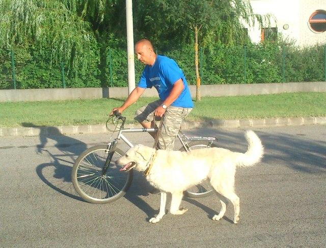 bicikli_kutya (4)