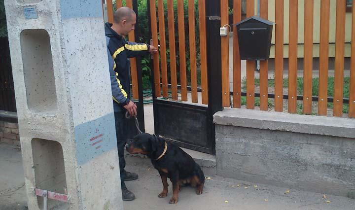 kapu_kutya