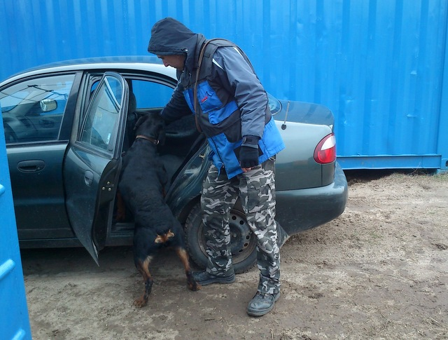 kutya_autoban