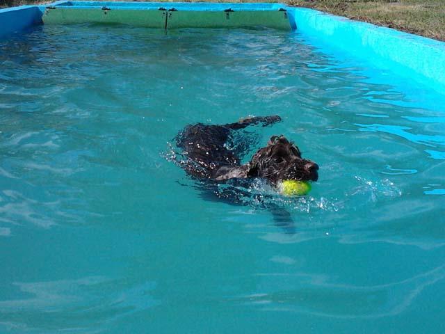 kutya_vizhez_szoktatas