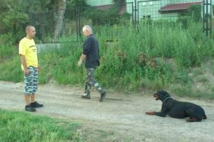 kutyakikepzes