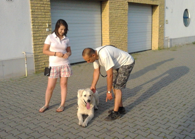 kutyakikepzes_haznal