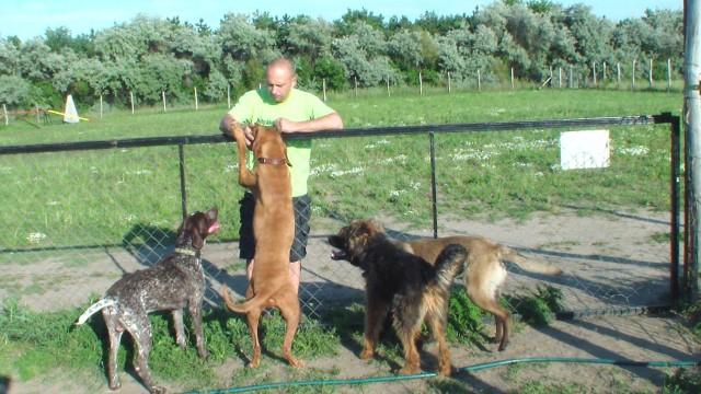 kutyapanzio (6)