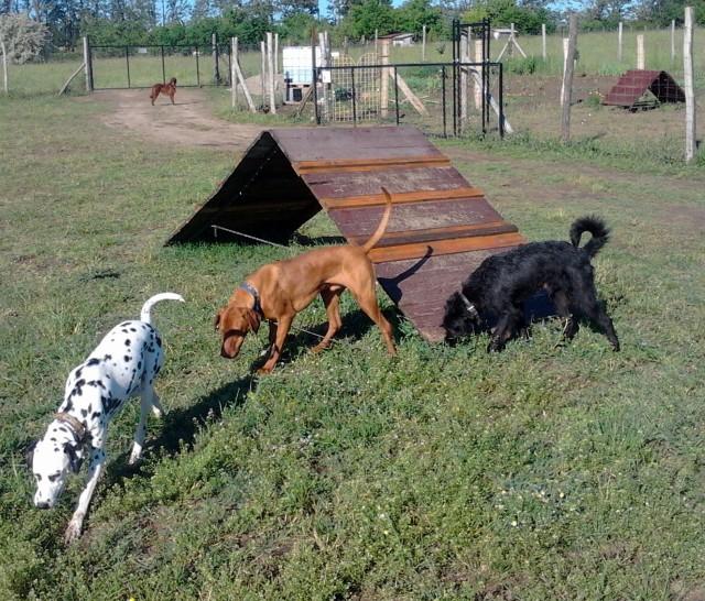 kutyapanzio2