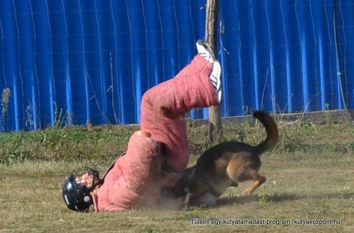 kutyatamadas_prodram (3)
