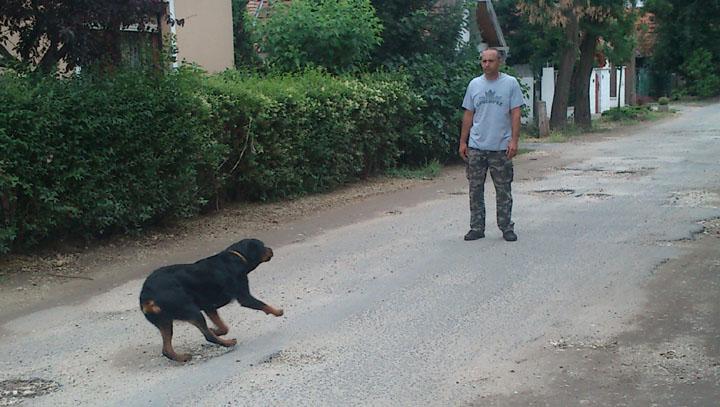 setalas_kutyaval